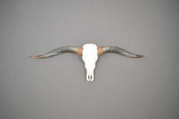 Longhorn schedel gebleekt 1