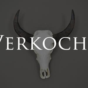 buffel schedel gebleekt 1 verkocht