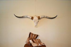 Longhorn gebleekt 1