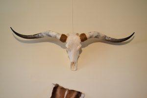 Longhorn 1 gebleekt