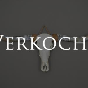 Longhorn schedel 1 verkocht