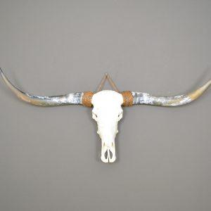 Longhorn schedel ongebleekt 1