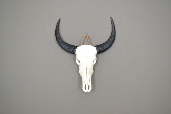 Buffel schedel ongebleekt 1