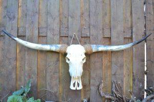 Longhorn ongebleekt 2