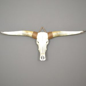 Longhorn schedel ongebleekt 2