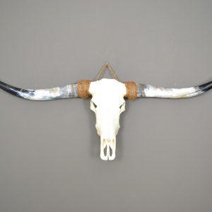 Longhorn schedel ongebleekt 3