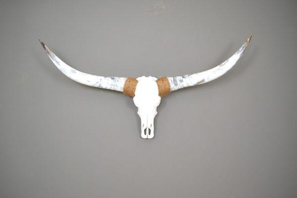 Gebleekte longhorn schedel XL1