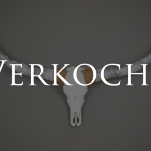 longhorn schedel 3 gebleekt