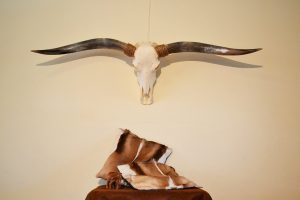Longhorn 3 gebleekt gepolijst