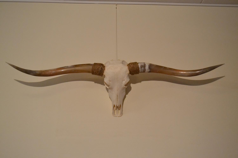 Longhorn schedel gebleekt 3 gepolijst