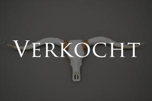 Gebleekte longhorn schedel 3 verkocht