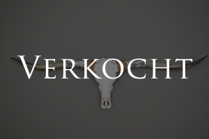 Longhorn schedel XL 1