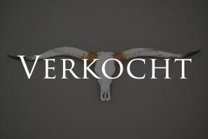 Gebleekte Longhorn schedel XL02 Verkocht
