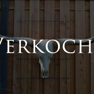 Gebleekte longhorn schedel 4 verkocht