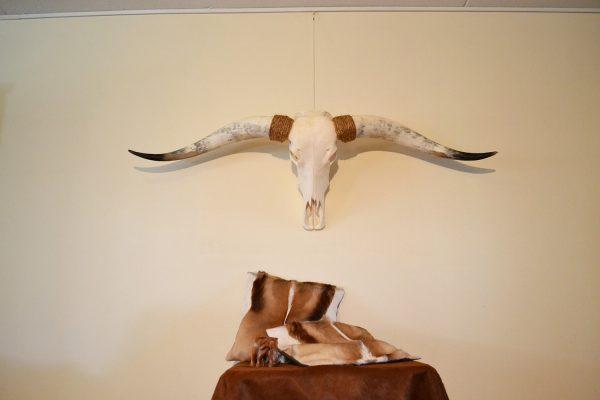 Longhorn gebleekt 5