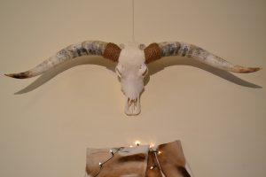 Longhorn schedel gebleekt XL 2