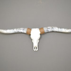Gebleekte longhorn schedel XXL 2