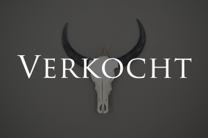 buffel schedel ongebleekt 2 verkocht