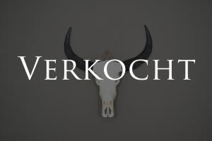 ongebleekte buffel schedel 2 XL