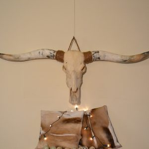 Longhorn schedel ongebleekt 5