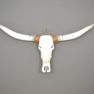 Longhorn schedel ongebleekt 8