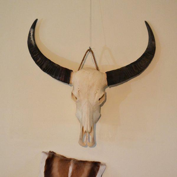 Buffel ongebleekt
