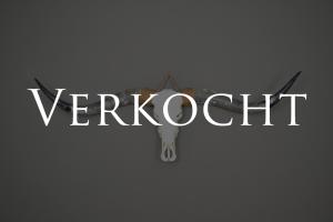 Ongebleekte Longhorn schedel XL 1