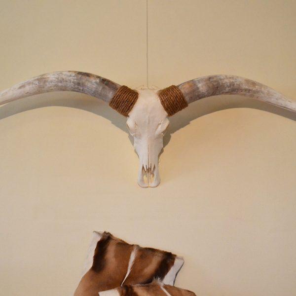 Longhorn gebleekt 6