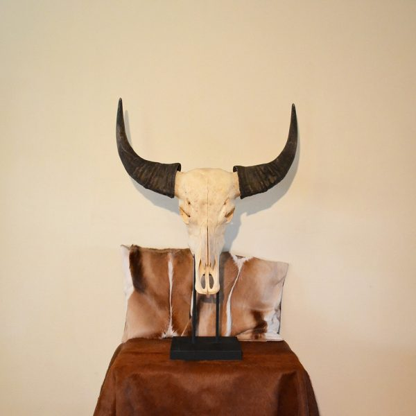 Buffel schedel op standaard ongebleekt 2