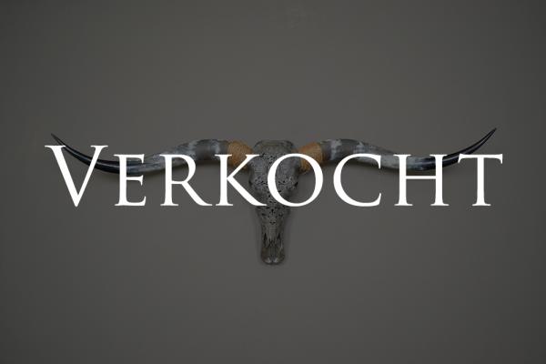 Gebleekte longhorn schedel