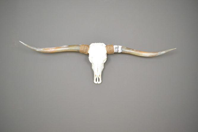Gebleekte longhorn schedel gepolijst 1