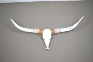 Gebleekte longhorn schedel 2