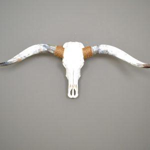 Gebleekte longhorn schedel 8