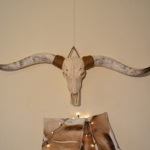 Longhorn schedel ongebleekt XL 2