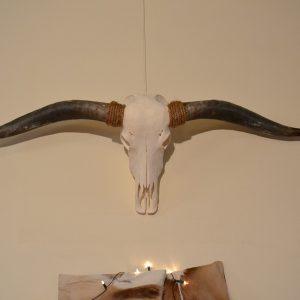 Longhorn schedel gebleekt 2
