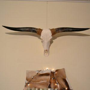 Longhorn schedel gebleekt 7