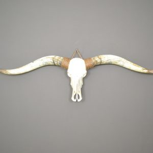 Longhorn schedel ongebleekt XL2