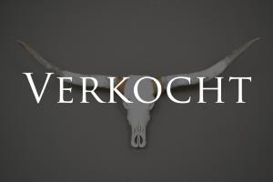 Longhorn schedel gebleekt 8