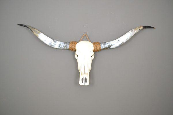 Longhorn schedel ongebleekt 9