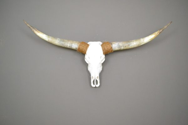 Gebleekte longhorn schedel 9